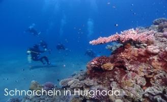 Snorkeln Hurghada